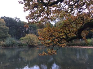 Autumn in Bookham Commons